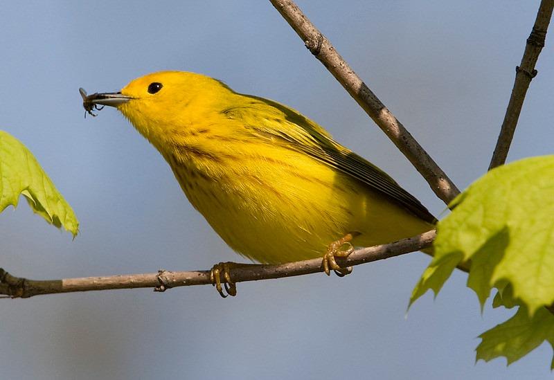 audubon bird walks